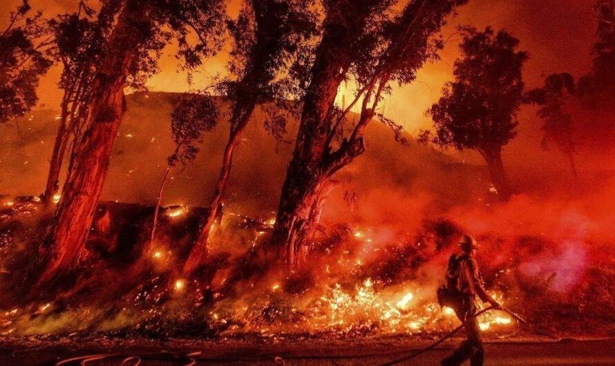Все о лесных пожарах в Австралии, которые продолжаются с июля 2019 года