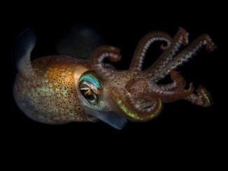 Странный обитатель Земли: кальмары умеют редактировать собственный геном