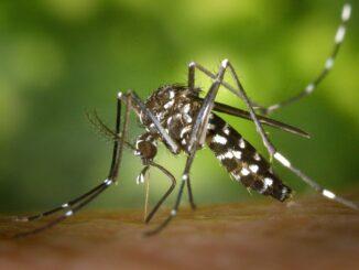 Лихорадка денге атакует страны Азии