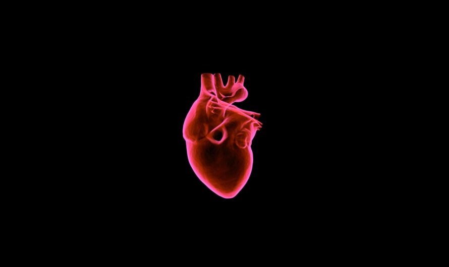 Ученые из США вырастили сердечную ткань