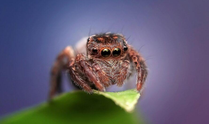 Теоретически пауки способны съесть человечество за год