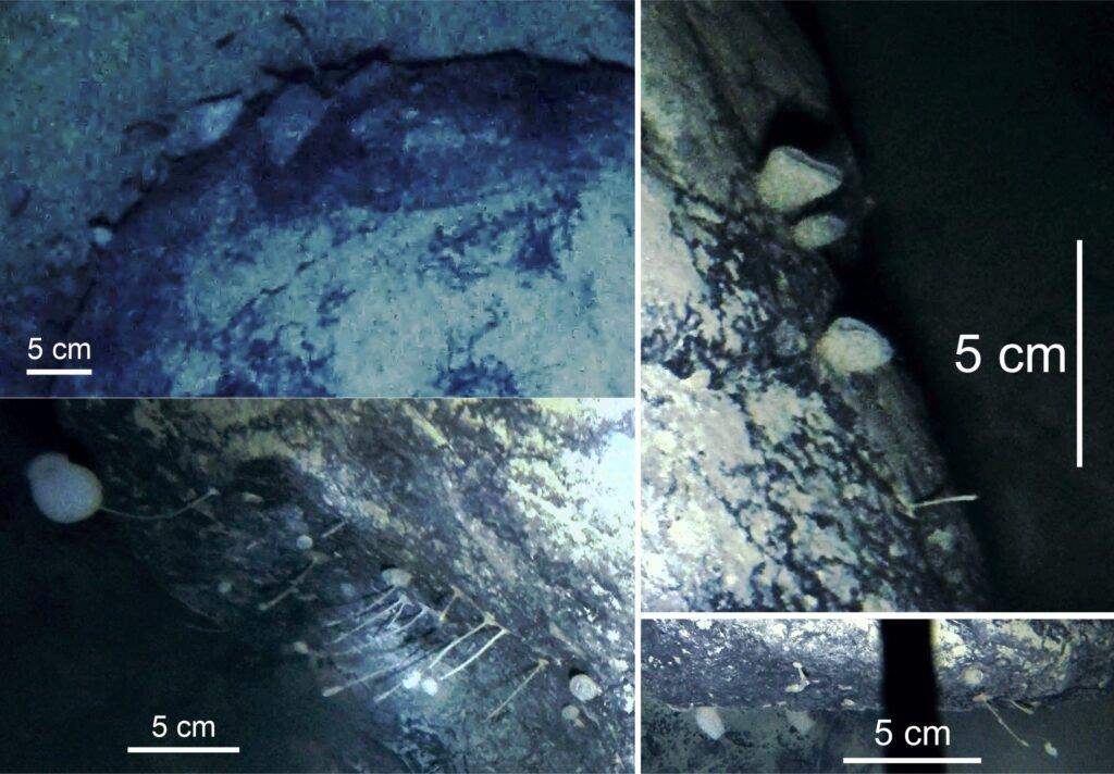 """Под полуторакилометровой толщей антарктического льда нашли """"странных существ"""""""