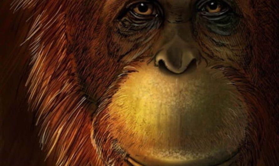 Самые большие животные, которые когда-либо жили на Земле