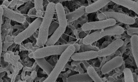 Отработана методика идентификации внеземных бактерий