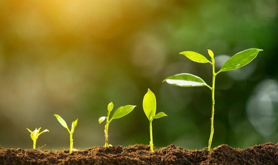 Что такое фотосинтез и почему он так важен для нашей планеты?