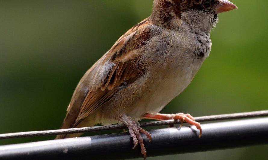 Почему птиц на проводах не бьет током?